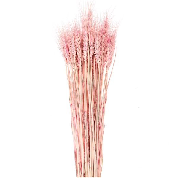 Made by Me Getrockneter Weizen pink 60-70cm 50 Stück