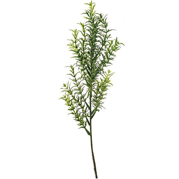 Thymianpflanze 30cm
