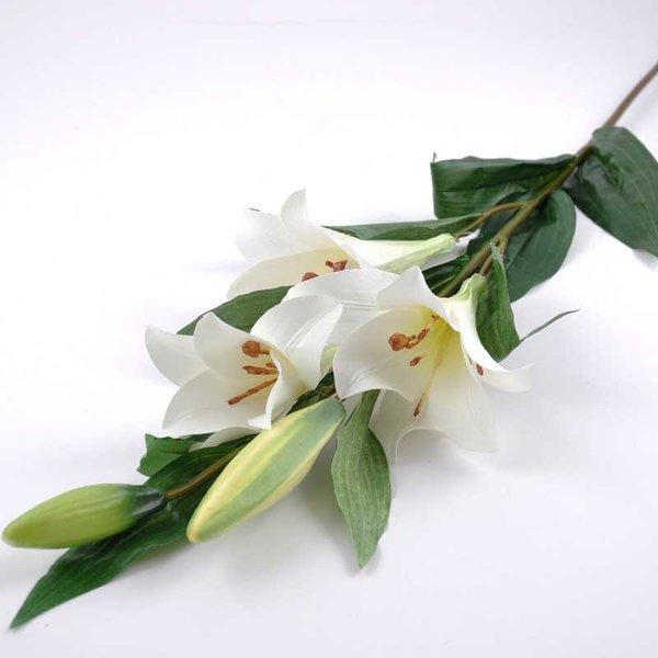 Lilie Longiflorum weiß 95cm