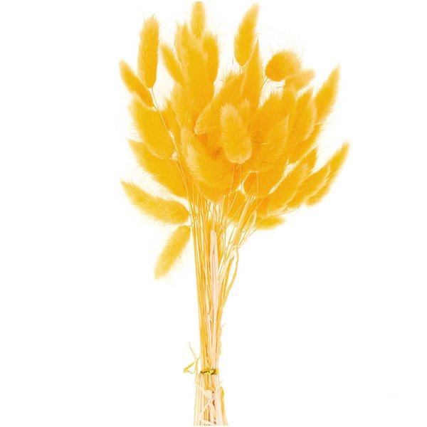 Made by Me Getrockneter Lagurus gelb 50-60cm 50 Stück