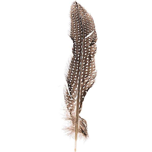 Perlhuhnfedern natur 16-20cm 5g