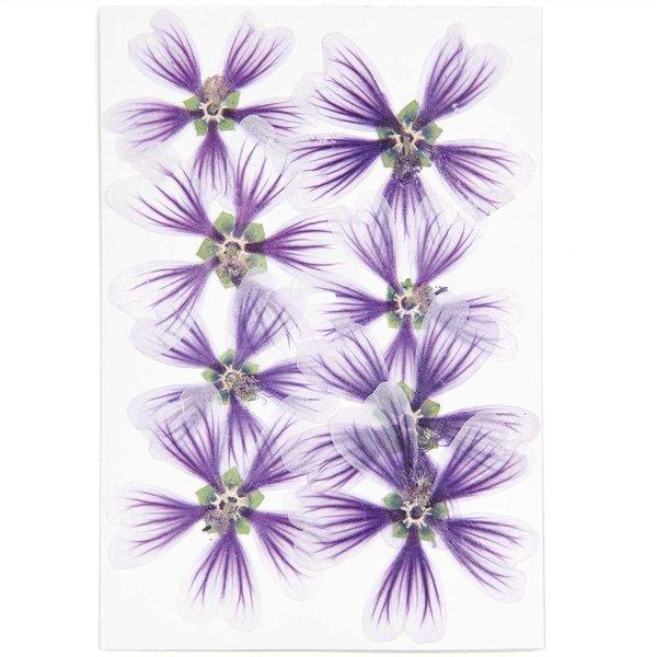 Made by Me Gepresste Blüten Stockrose violett 8 Stück