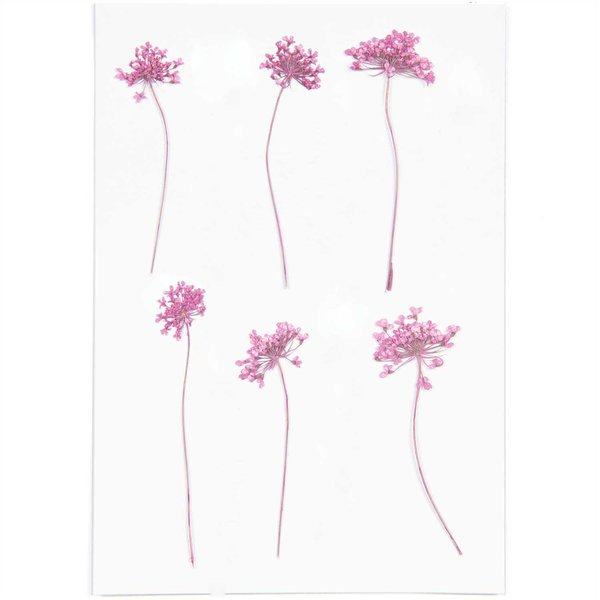 Made by Me Gepresste Blüten Ammi pink 6 Stück