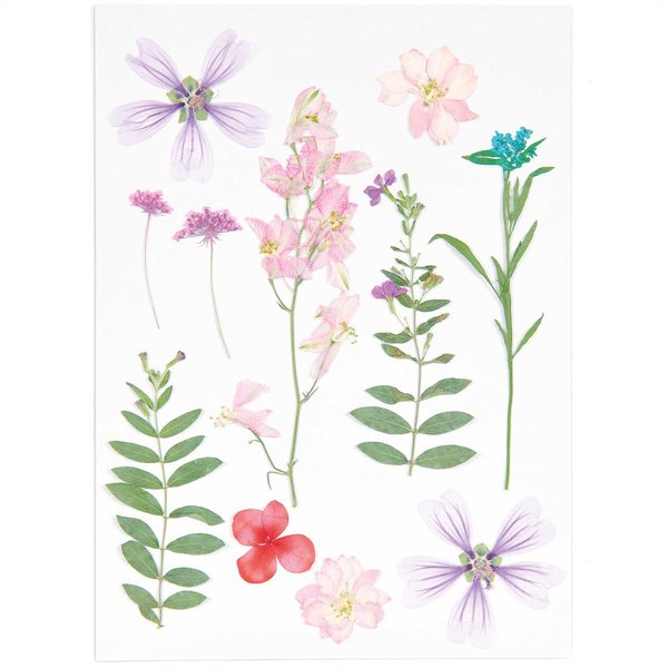Made by Me Gepresste Blüten Mix Set rosa-violett 11 Stück