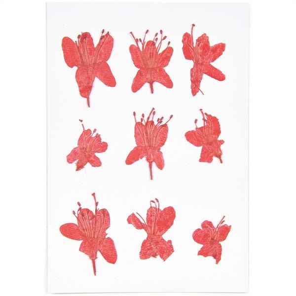 Made by Me Gepresste Blüten Azalee rot 9 Stück