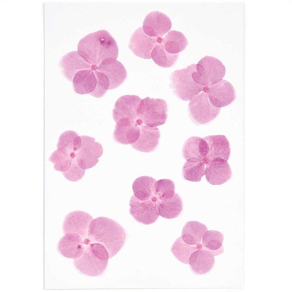 Made by Me Gepresste Blüten Hortensie pink 9 Stück
