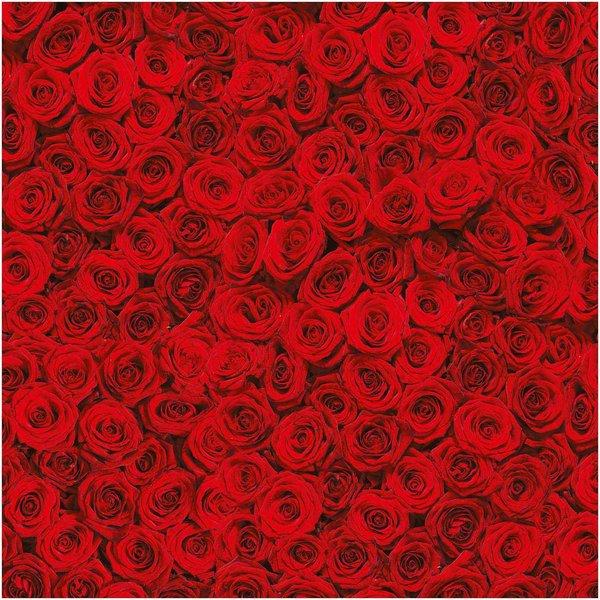 folia Fotokarton Rote Rosen 50x70cm 270g/m²