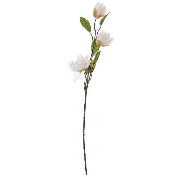 Magnolie mit 3 Blüten weiß 65cm