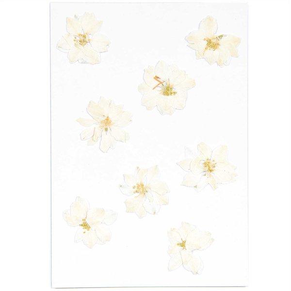 Made by Me Gepresste Blüten Rittersporn weiß 8 Stück