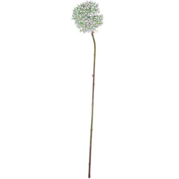 Allium weiß-grün 55cm
