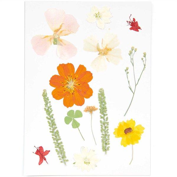 Made by Me Gepresste Blüten Mix Set gelb-beige 13 Stück