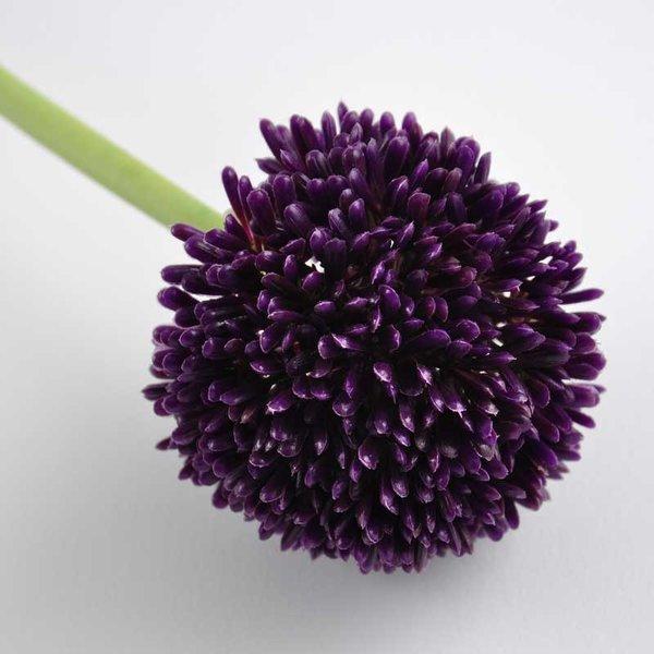 Allium violett 59cm