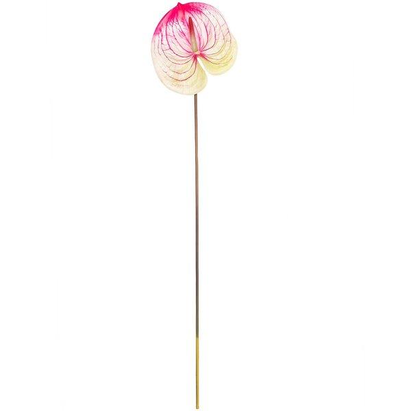 Anthurie pink-grün 70cm