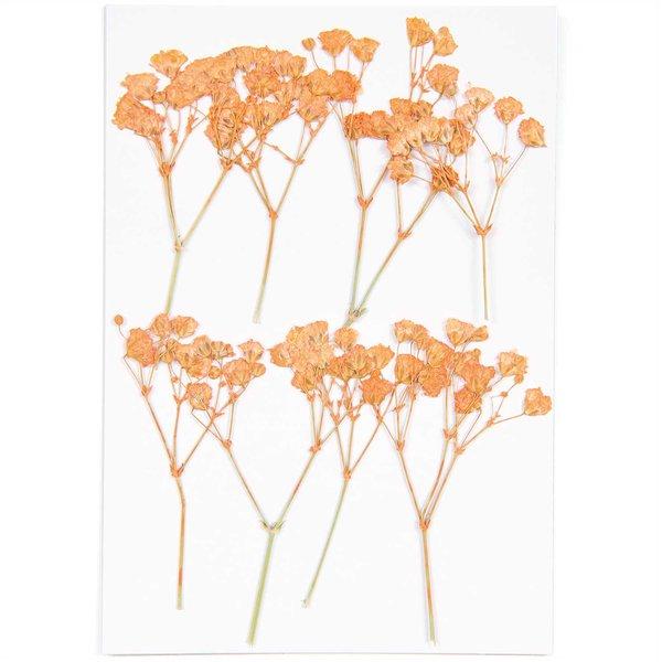 Made by Me Gepresste Blüten Schleierkraut orange 8 Stück