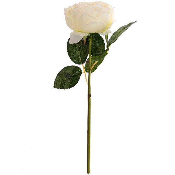 Bauernrose weiß 32cm