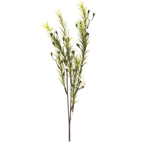 Waxflower weiß 38cm