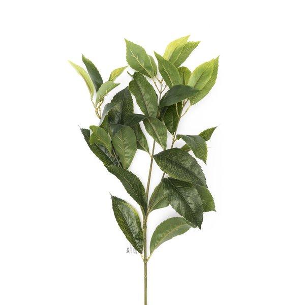 Ficuszweig elastica grün 49cm