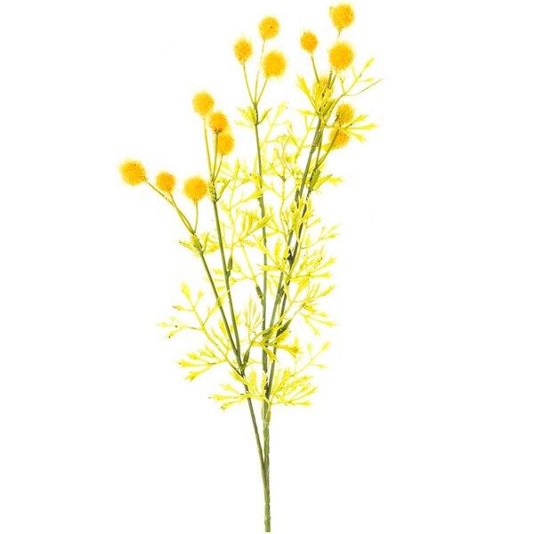 Mimose gelb 70cm