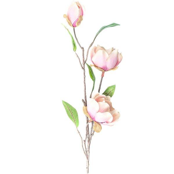 Magnolie mit 3 Blüten rosa 65cm