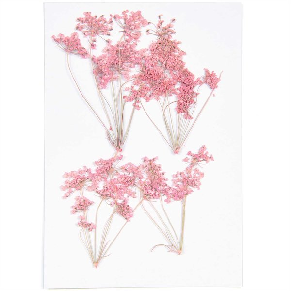 Made by Me Gepresste Blüten Ammi Zweig rosa 4 Stück